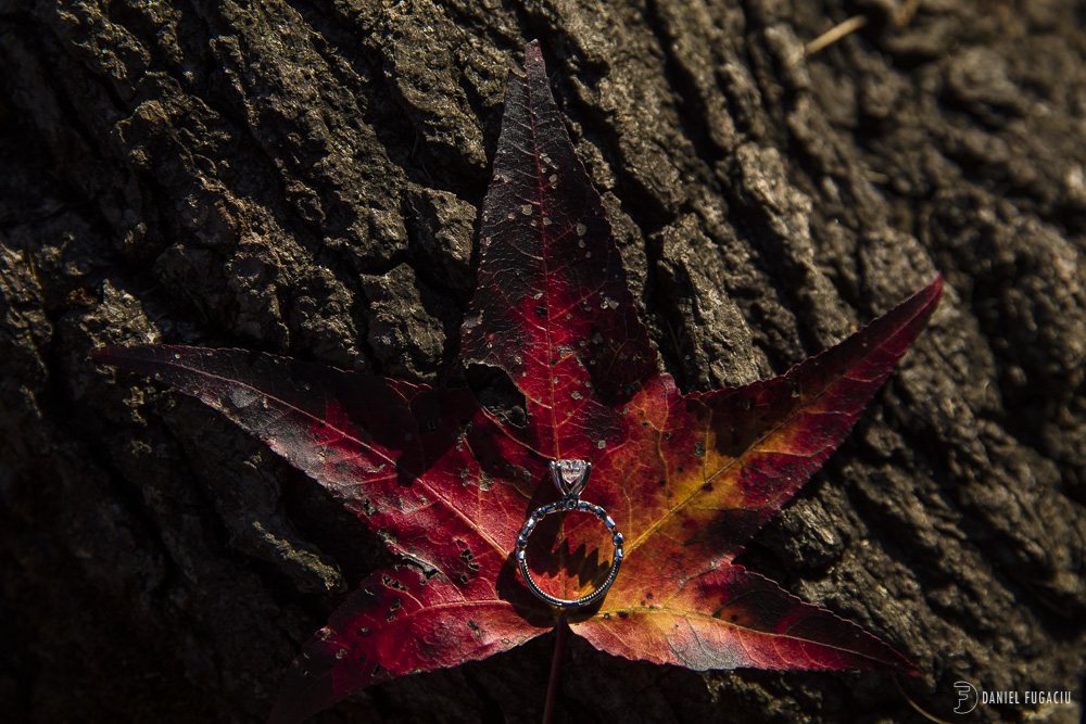 wedding ring on red leaf